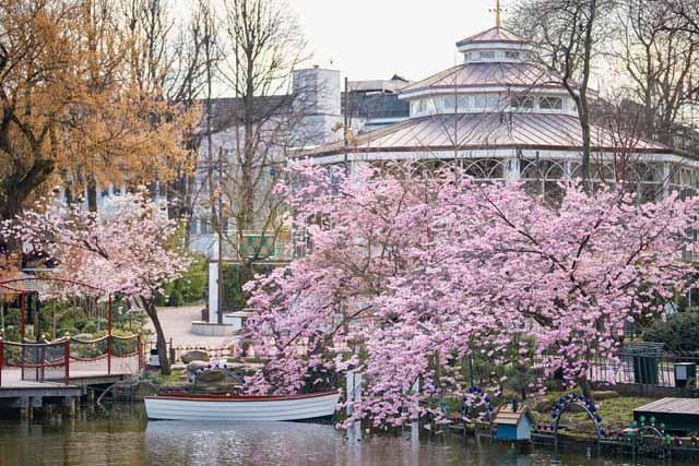 Kirsebærtræer i Tivoli